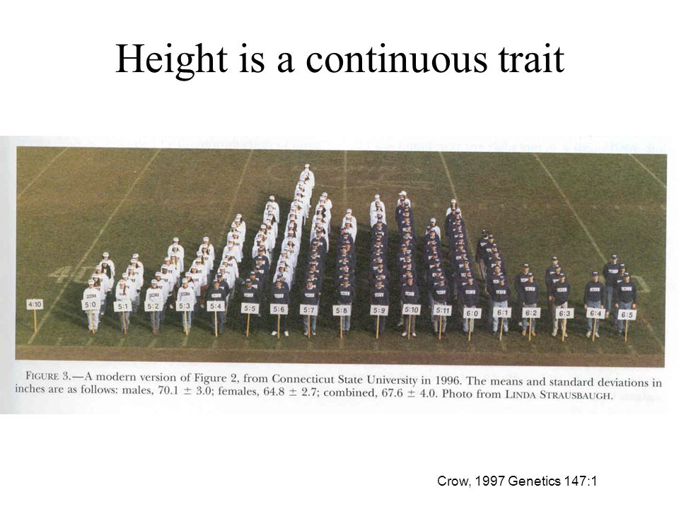 Height is a continuous trait Crow, 1997 Genetics 147:1