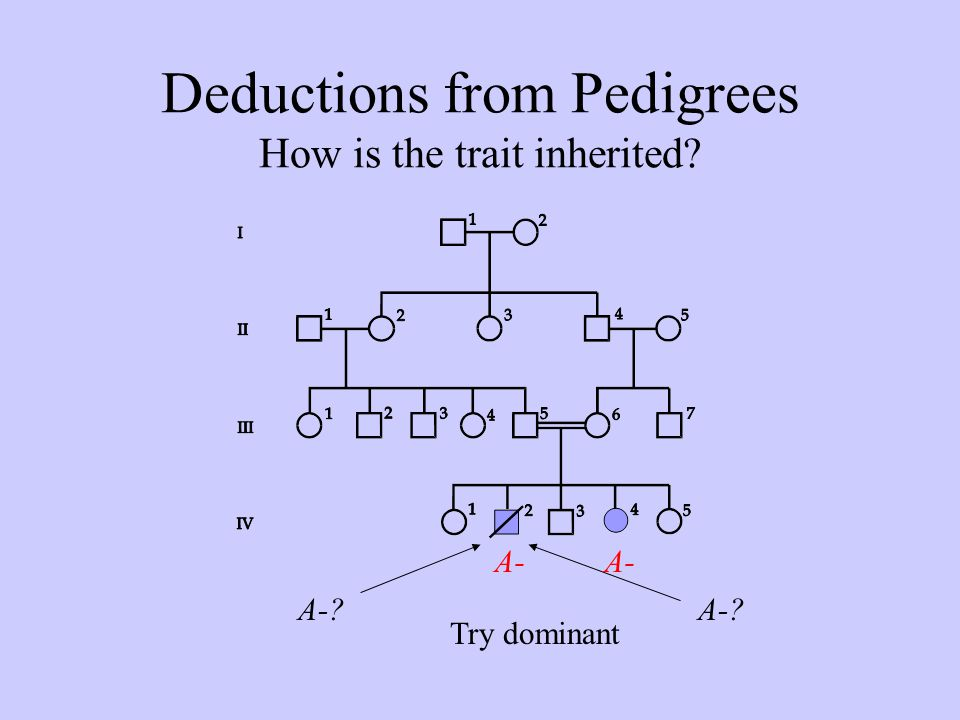 Deductions from Pedigrees How is the trait inherited? Try dominant A-? A-
