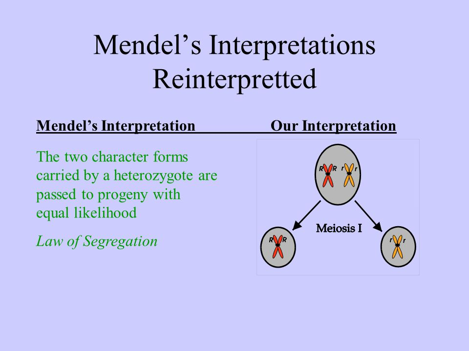 Mendel's Interpretations Reinterpretted Mendel's InterpretationOur Interpretation The two character forms carried by a heterozygote are passed to progeny with equal likelihood Law of Segregation