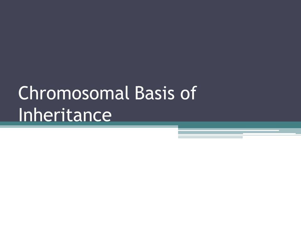 Chromosomal Basis of Inheritance