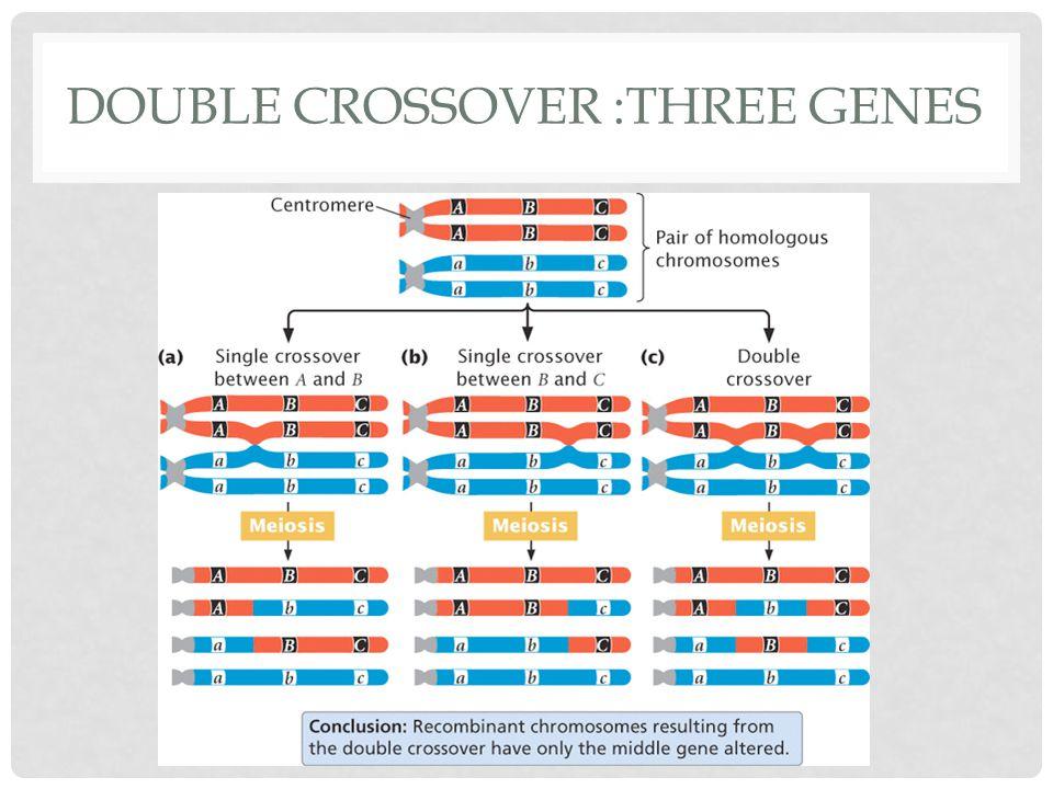 DOUBLE CROSSOVER :THREE GENES
