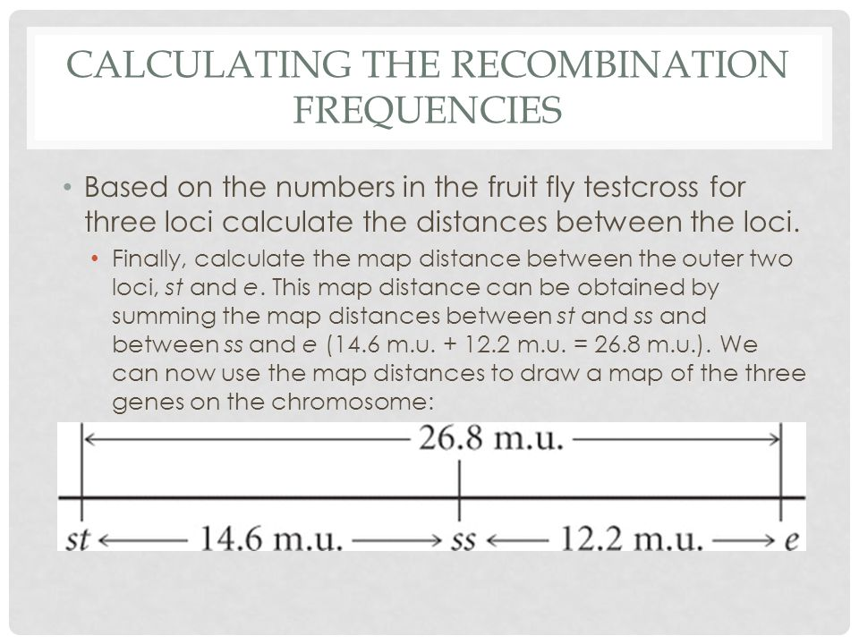 CALCULATING THE RECOMBINATION FREQUENCIES Based on the numbers in the fruit fly testcross for three loci calculate the distances between the loci.