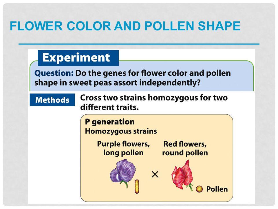 FLOWER COLOR AND POLLEN SHAPE