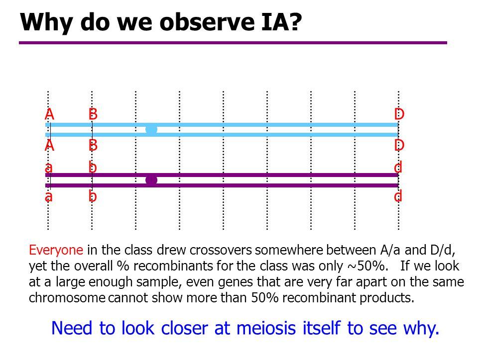 Class aggregate data: 2 P, 2 R AD, ad, Ad, aD 4 RAd, aD 4 PAD, ad Number R gametesNumber P gametesNumber?P or R?Genotype A-D # Recombinants % Rec? 19