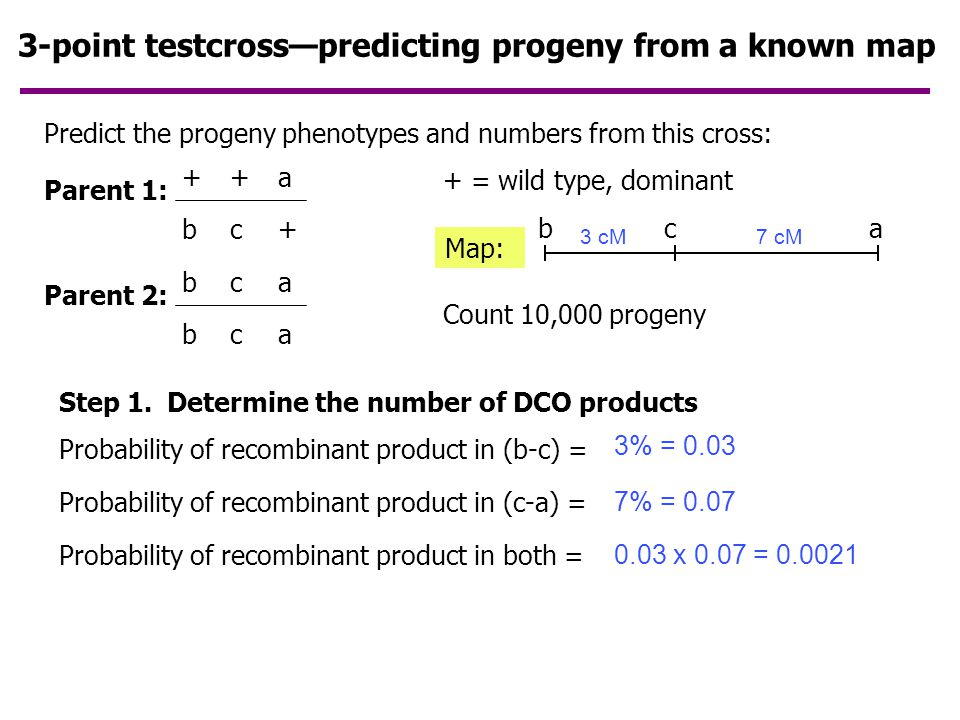 3-point testcrosses The problem with using two markers (like a and d below)… double crossovers can go undetected  underestimation of recombinant frequency Solution: include a third marker between the other two…  more DCOs revealed Plus… gene order revealed (more later)
