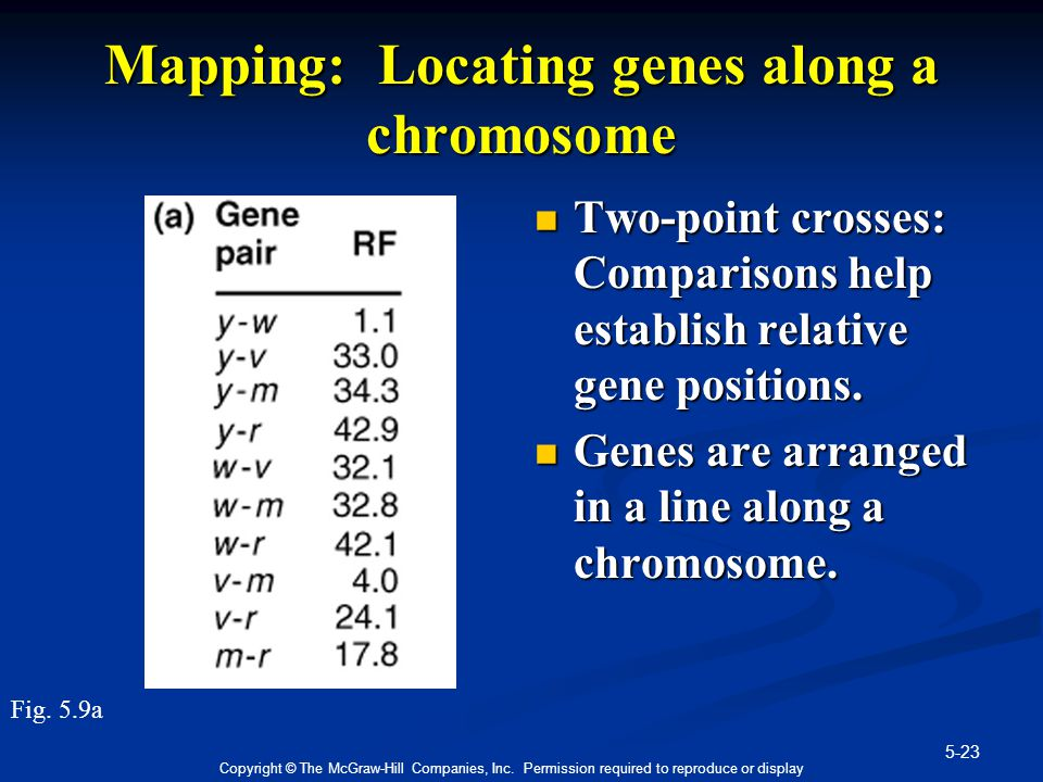 5-23 Copyright © The McGraw-Hill Companies, Inc. Permission required to reproduce or display Mapping: Locating genes along a chromosome Two-point cros