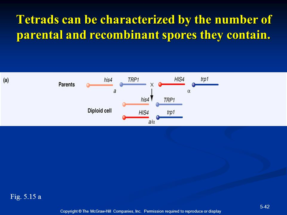 5-42 Copyright © The McGraw-Hill Companies, Inc. Permission required to reproduce or display Tetrads can be characterized by the number of parental an