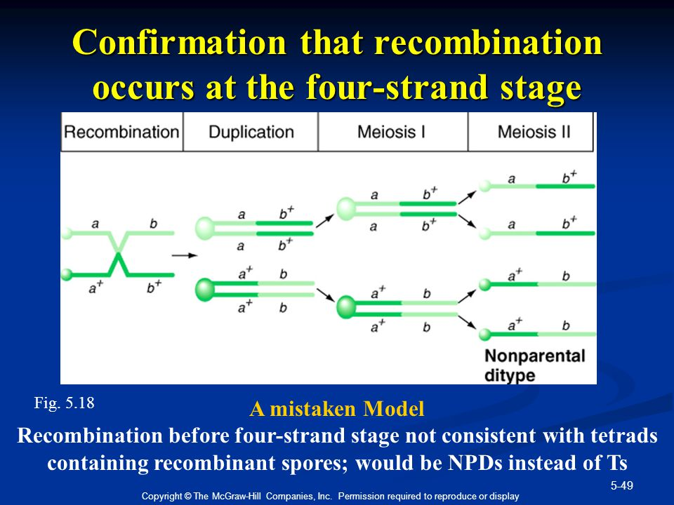5-49 Copyright © The McGraw-Hill Companies, Inc. Permission required to reproduce or display Confirmation that recombination occurs at the four-strand