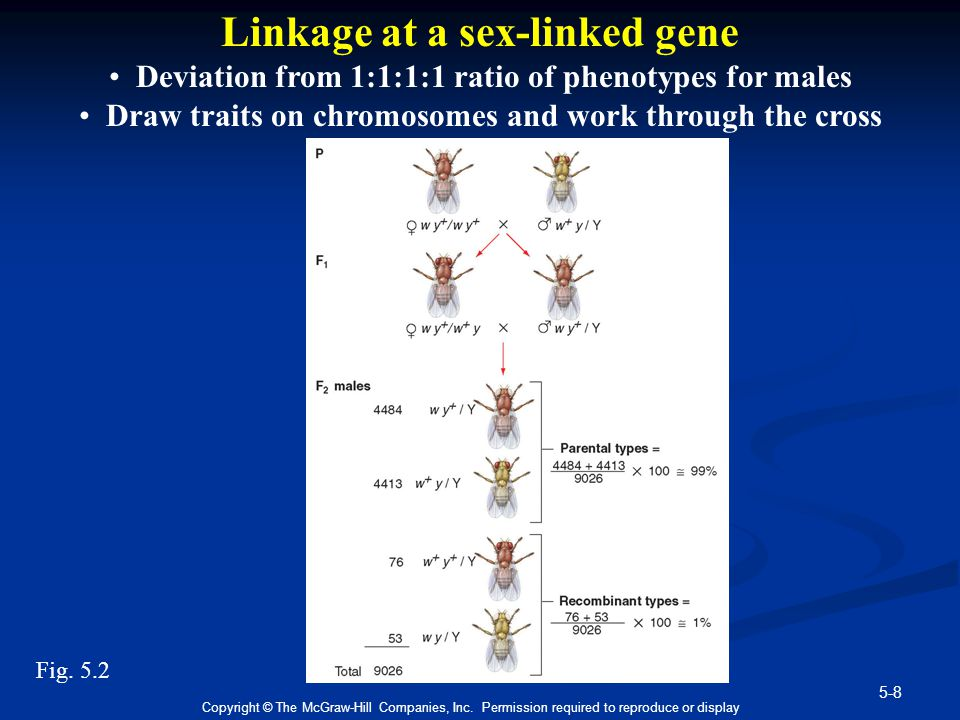 5-8 Copyright © The McGraw-Hill Companies, Inc. Permission required to reproduce or display Linkage at a sex-linked gene Deviation from 1:1:1:1 ratio