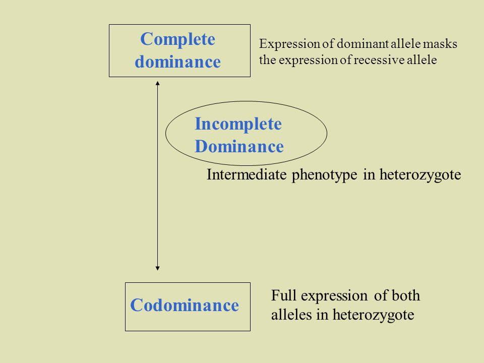 Complete dominance Codominance Incomplete Dominance Full expression of both alleles in heterozygote Intermediate phenotype in heterozygote Expression of dominant allele masks the expression of recessive allele