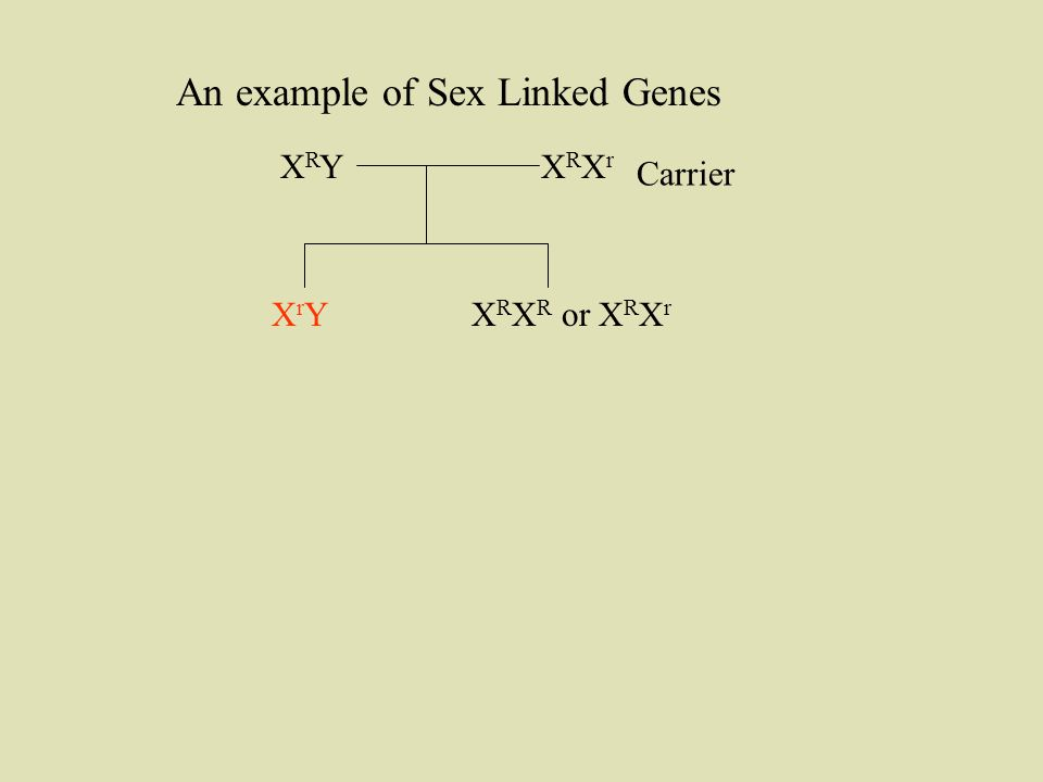 XRXrXRXr XRYXRY XrYXrYX R X R or X R X r Carrier An example of Sex Linked Genes