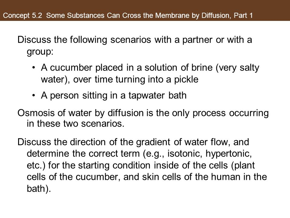 Concept 5.2 Some Substances Can Cross the Membrane by Diffusion, Part 1 Discuss the following scenarios with a partner or with a group: A cucumber pla