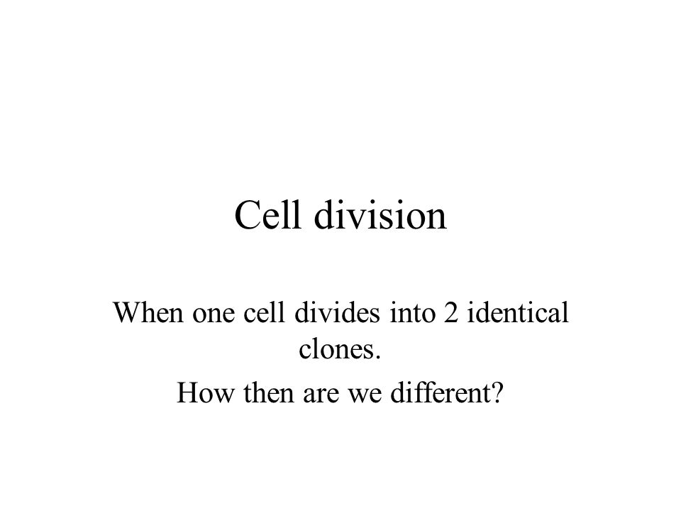 Cell division When one cell divides into 2 identical clones. How then are we different?