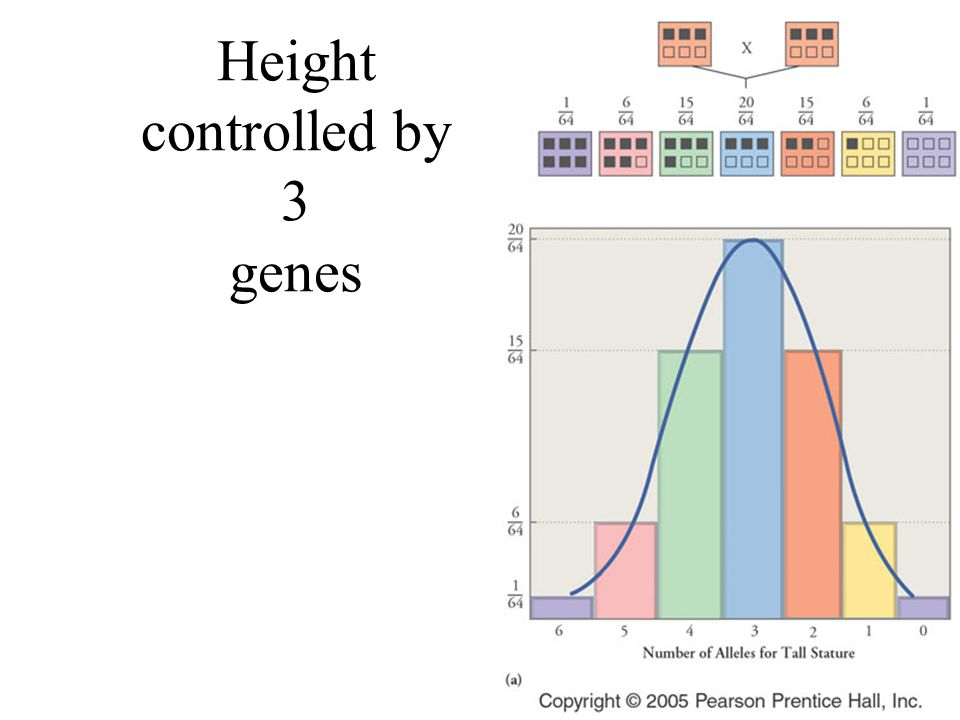 Variations on Mendelian Genetics Codominance: both alleles are expressed in heterozygotes like blood type Multiple effects: one gene may have many phe