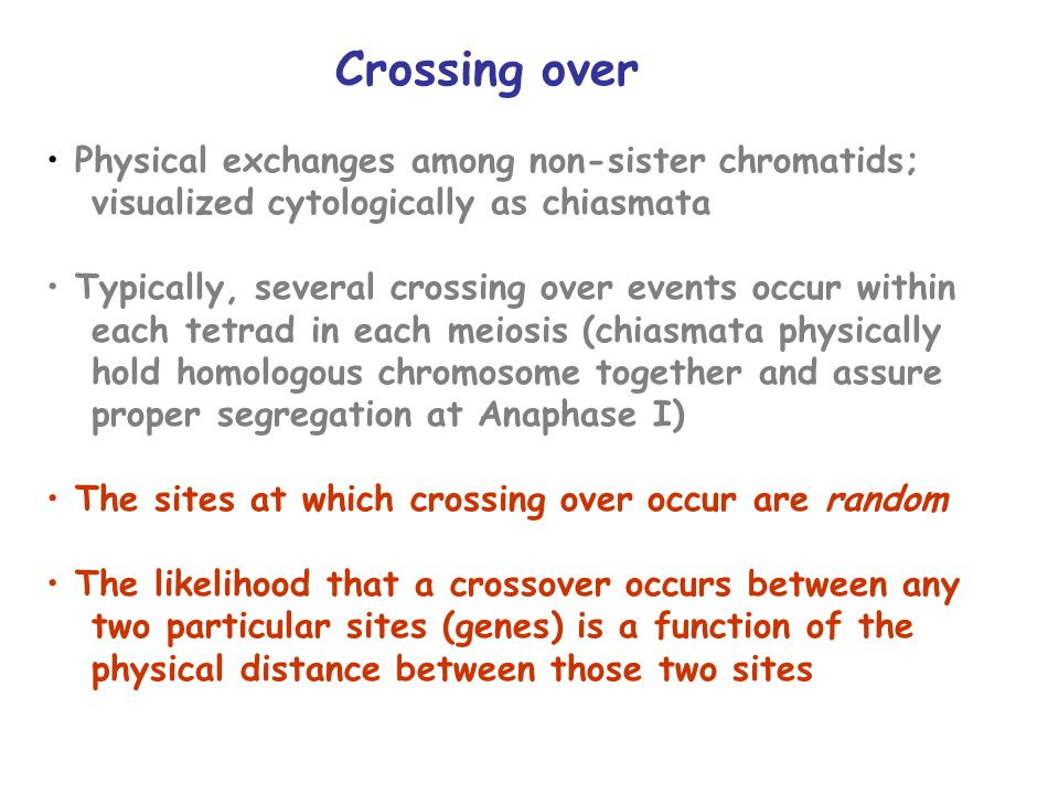 Crossing over Physical exchanges among non-sister chromatids; visualized cytologically as chiasmata Typically, several crossing over events occur within each tetrad in each meiosis (chiasmata physically hold homologous chromosome together and assure proper segregation at Anaphase I) The sites at which crossing over occur are random The likelihood that a crossover occurs between any two particular sites (genes) is a function of the physical distance between those two sites