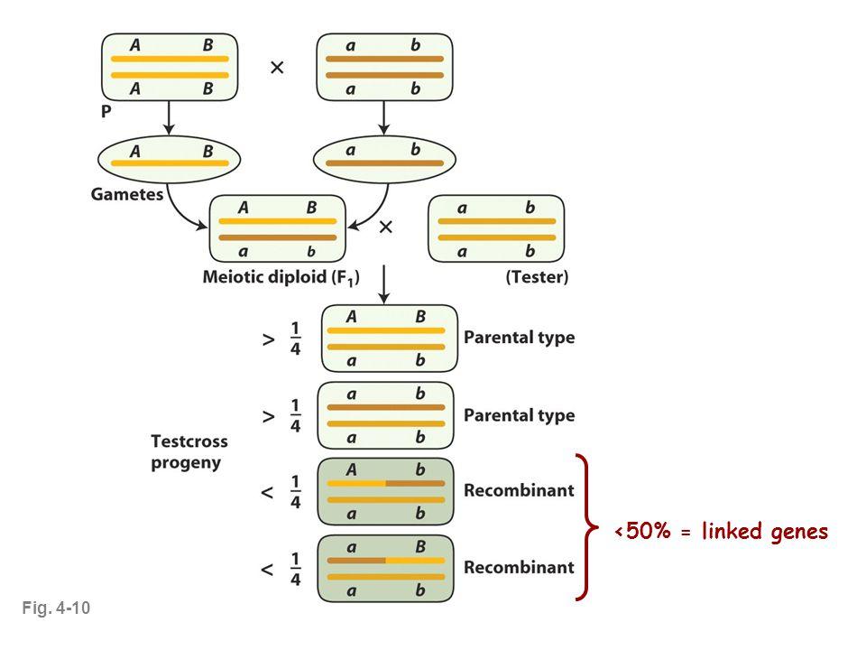 Fig. 4-10 <50% = linked genes