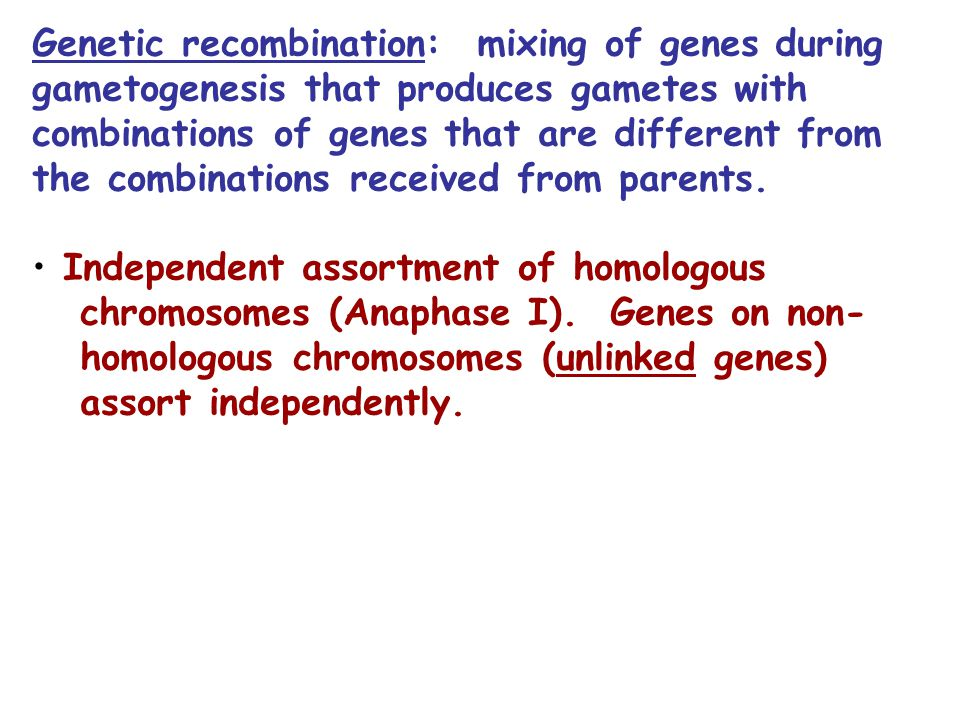 Genetic recombination: mixing of genes during gametogenesis that produces gametes with combinations of genes that are different from the combinations received from parents.