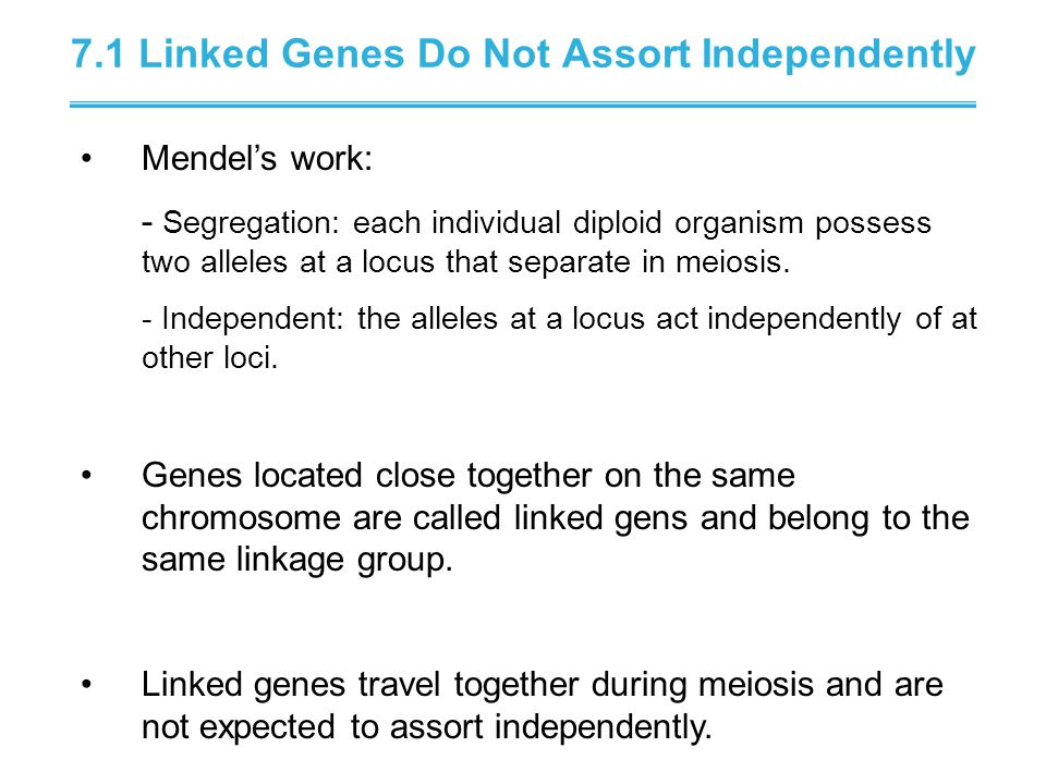 7.1 Linked Genes Do Not Assort Independently Mendel's work: - Segregation: each individual diploid organism possess two alleles at a locus that separate in meiosis.