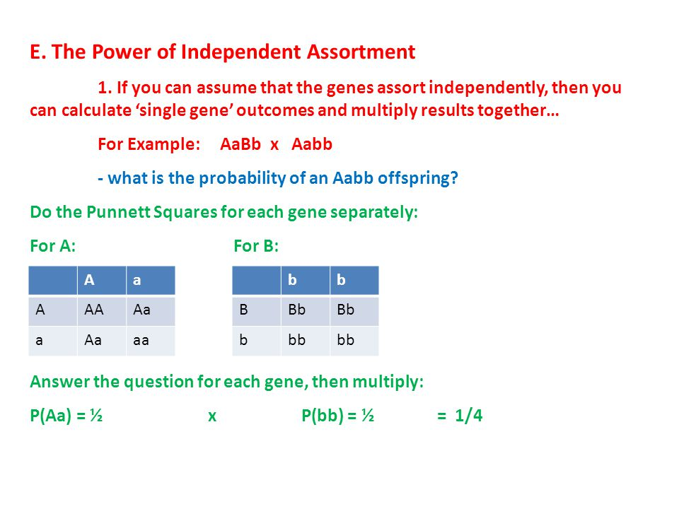 E. The Power of Independent Assortment 1. If you can assume that the genes assort independently, then you can calculate 'single gene' outcomes and mul