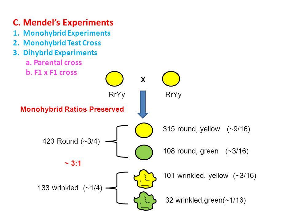C.Mendel's Experiments 1. Monohybrid Experiments 2.