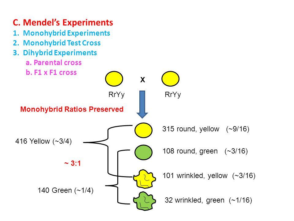 C. Mendel's Experiments 1. Monohybrid Experiments 2.