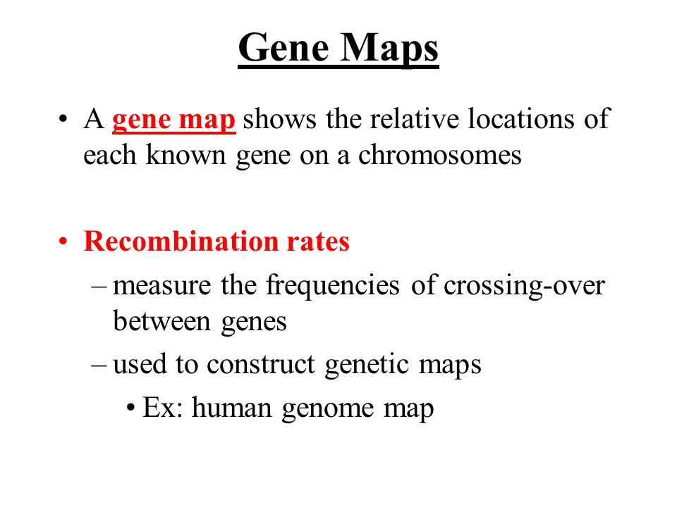 Gene Maps A gene map shows the relative locations of each known gene on a chromosomes Recombination rates –measure the frequencies of crossing-over between genes –used to construct genetic maps Ex: human genome map