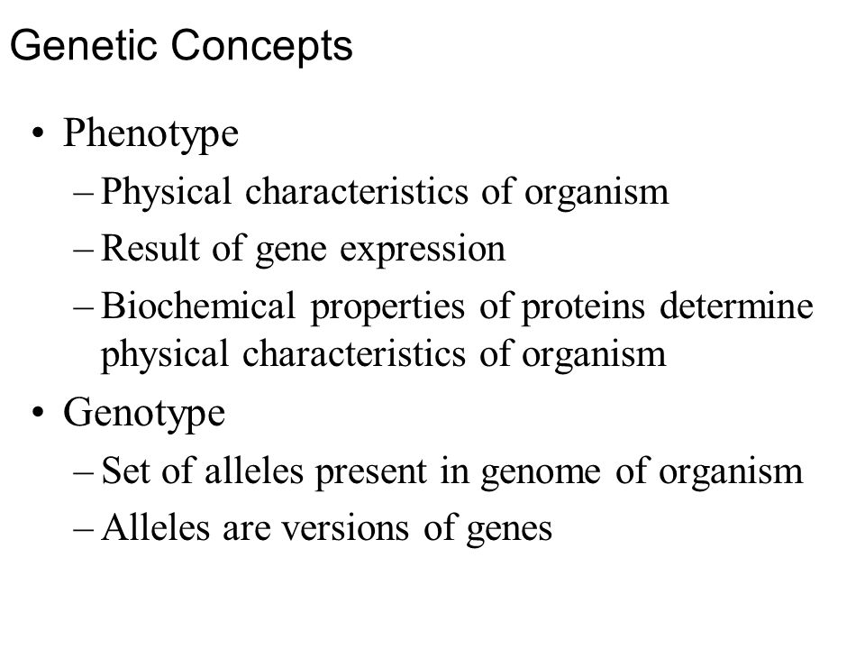 Genetic Concepts Phenotype –Physical characteristics of organism –Result of gene expression –Biochemical properties of proteins determine physical characteristics of organism Genotype –Set of alleles present in genome of organism –Alleles are versions of genes