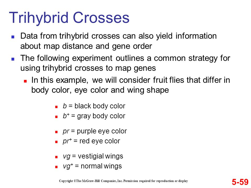 Data from trihybrid crosses can also yield information about map distance and gene order The following experiment outlines a common strategy for using