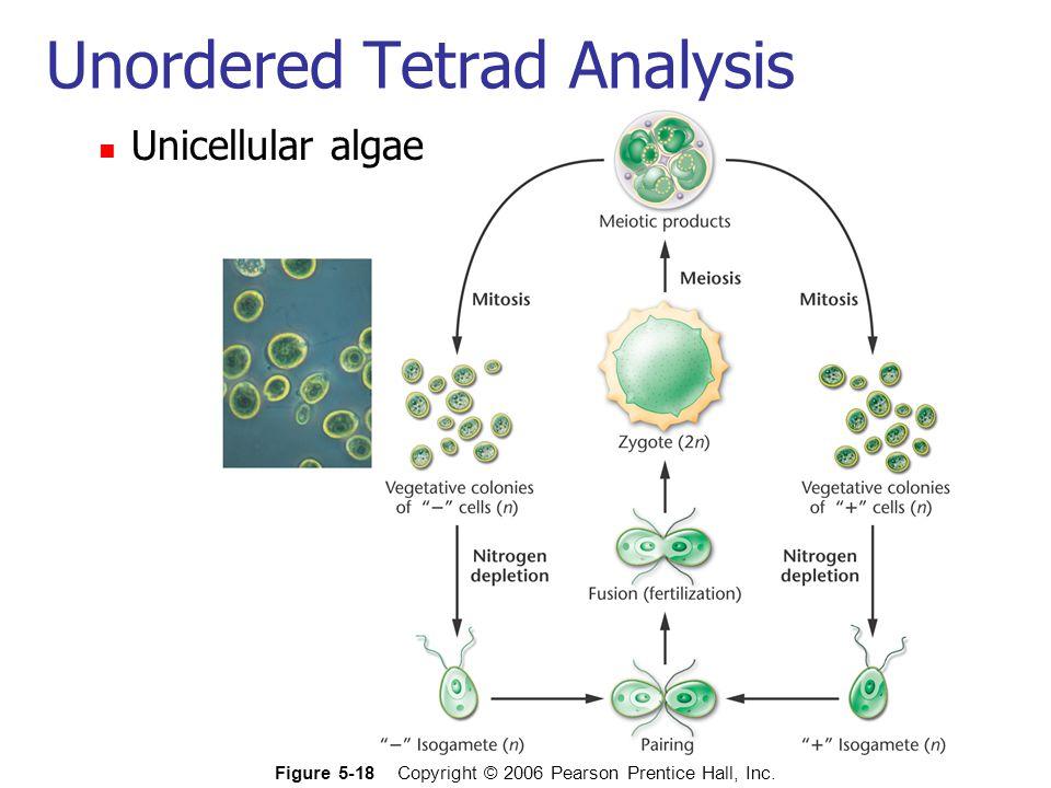Unicellular algae Figure 5-18 Copyright © 2006 Pearson Prentice Hall, Inc. Unordered Tetrad Analysis