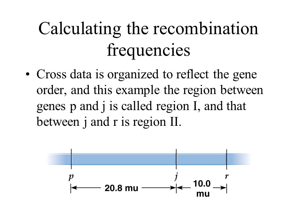 Calculating the recombination frequencies Cross data is organized to reflect the gene order, and this example the region between genes p and j is call