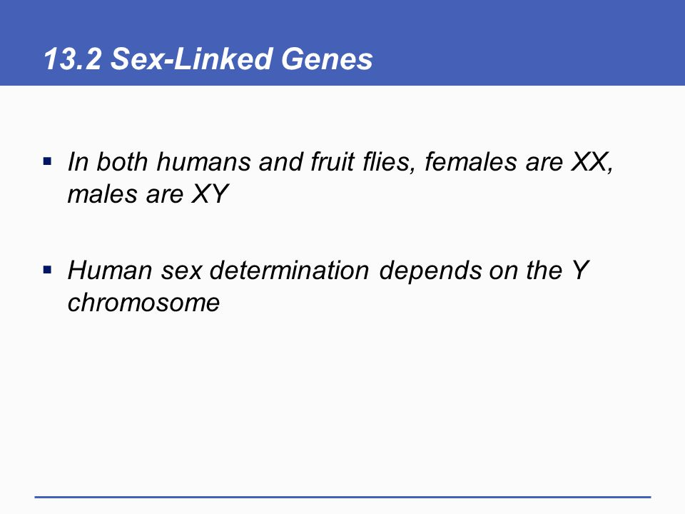 13.2 Sex-Linked Genes  In both humans and fruit flies, females are XX, males are XY  Human sex determination depends on the Y chromosome