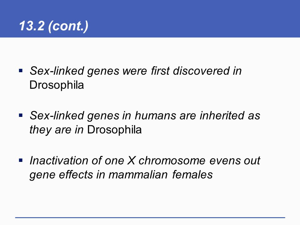 13.2 (cont.)  Sex-linked genes were first discovered in Drosophila  Sex-linked genes in humans are inherited as they are in Drosophila  Inactivation of one X chromosome evens out gene effects in mammalian females