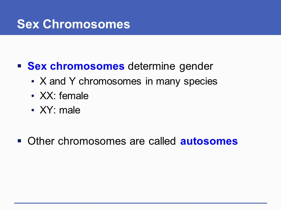 Sex Chromosomes  Sex chromosomes determine gender X and Y chromosomes in many species XX: female XY: male  Other chromosomes are called autosomes
