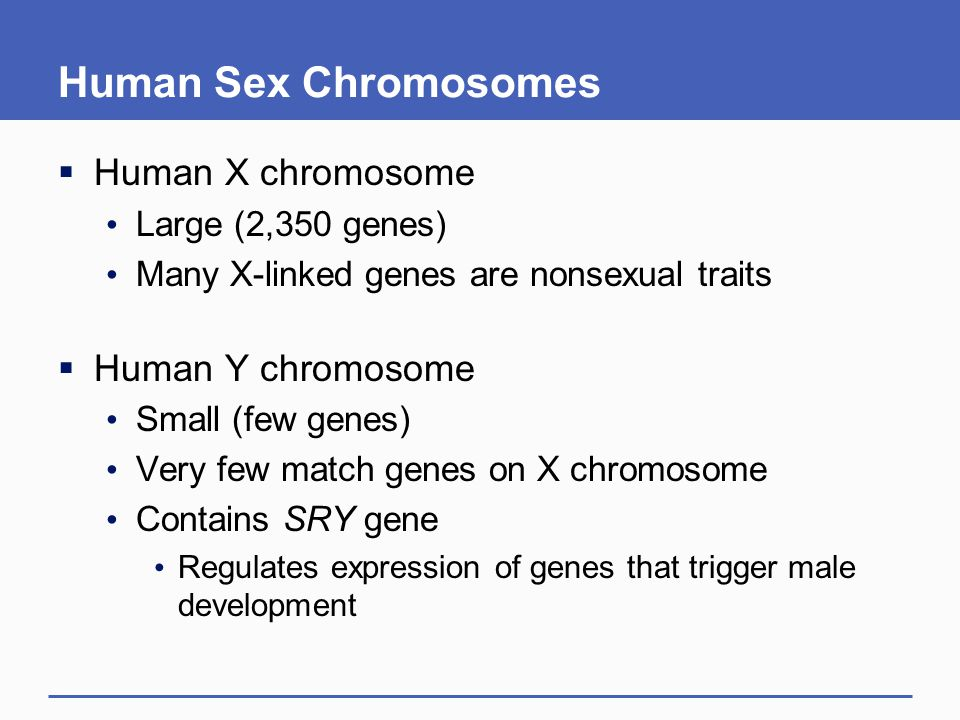 Human Sex Chromosomes  Human X chromosome Large (2,350 genes) Many X-linked genes are nonsexual traits  Human Y chromosome Small (few genes) Very fe