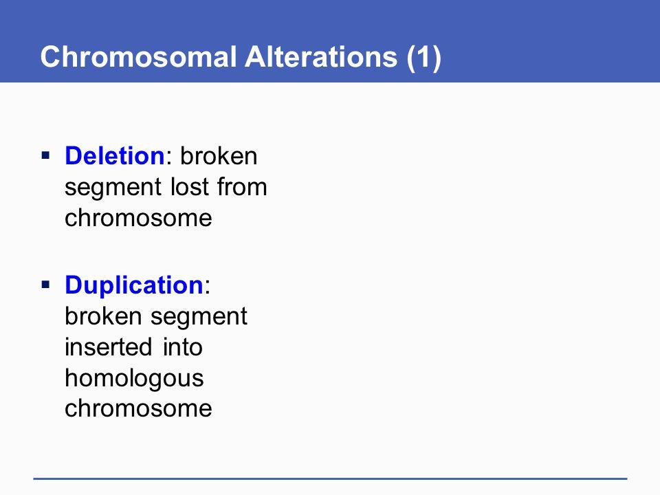 Chromosomal Alterations (1)  Deletion: broken segment lost from chromosome  Duplication: broken segment inserted into homologous chromosome