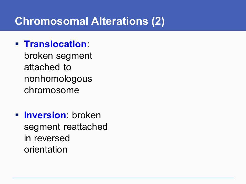 Chromosomal Alterations (2)  Translocation: broken segment attached to nonhomologous chromosome  Inversion: broken segment reattached in reversed or