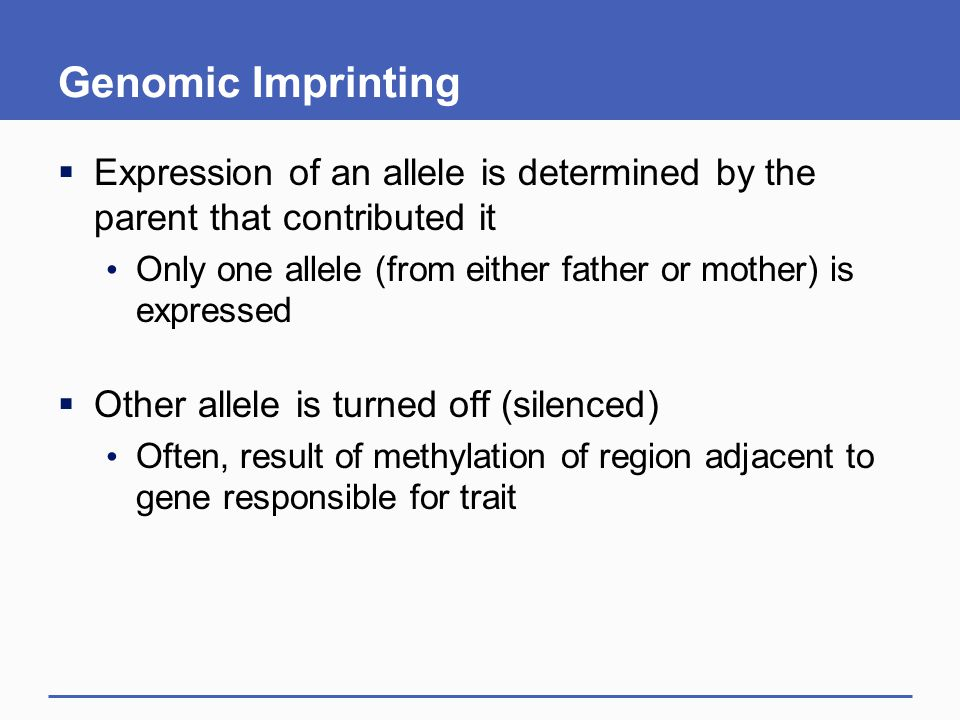 Genomic Imprinting  Expression of an allele is determined by the parent that contributed it Only one allele (from either father or mother) is expressed  Other allele is turned off (silenced) Often, result of methylation of region adjacent to gene responsible for trait
