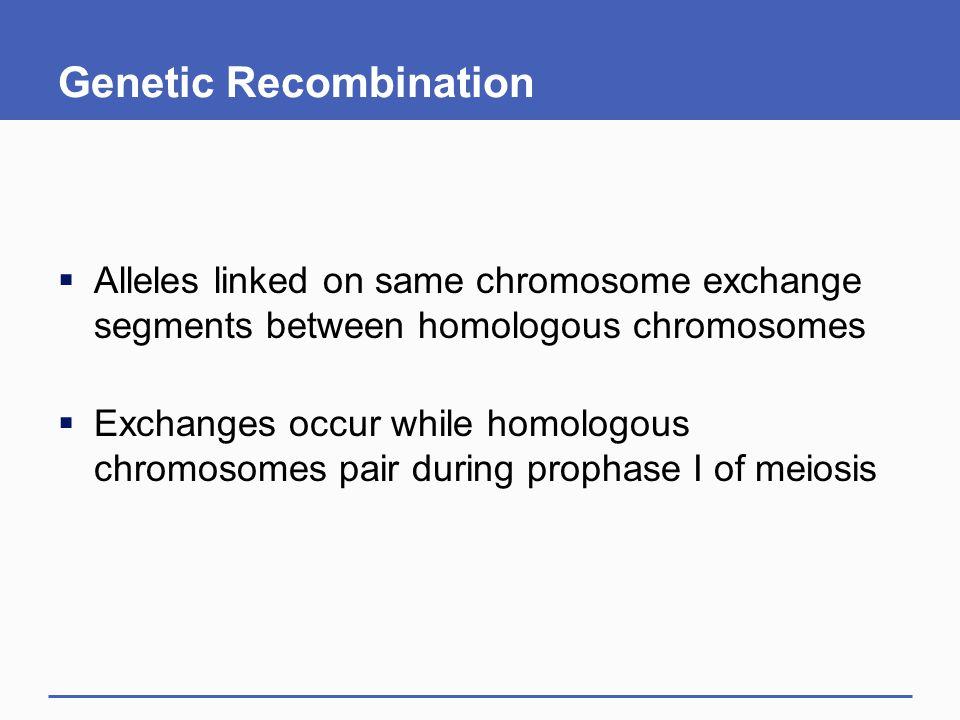 Genetic Recombination  Alleles linked on same chromosome exchange segments between homologous chromosomes  Exchanges occur while homologous chromoso