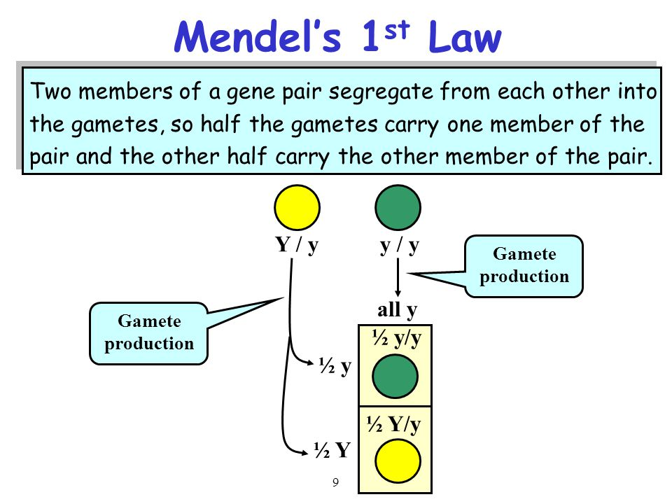 9 Two members of a gene pair segregate from each other into the gametes, so half the gametes carry one member of the pair and the other half carry the