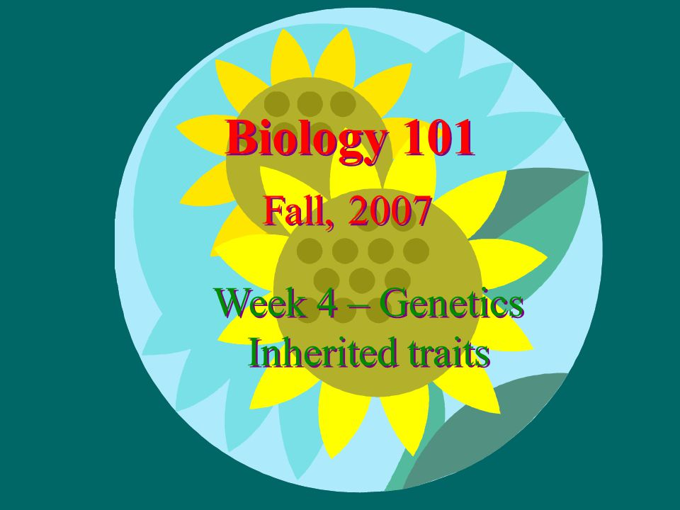 Biology 101 Fall, 2007 Week 4 – Genetics Inherited traits Week 4 – Genetics Inherited traits