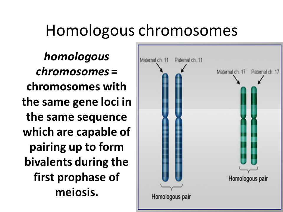 1.pairing of homologous chromosomes 2.crossing over 3.two divisions 4.results in four haploid cells