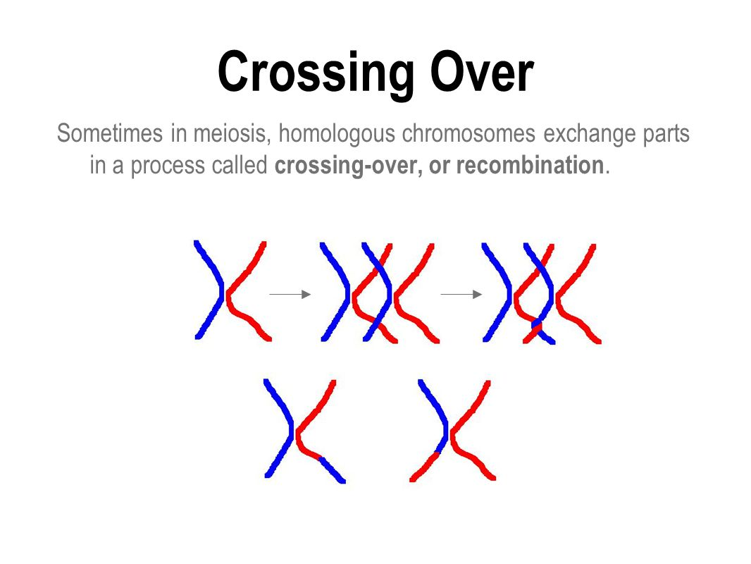 Crossing Over Sometimes in meiosis, homologous chromosomes exchange parts in a process called crossing-over, or recombination.