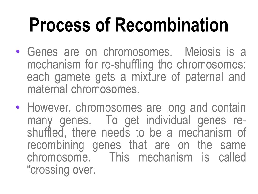 Process of Recombination Genes are on chromosomes. Meiosis is a mechanism for re-shuffling the chromosomes: each gamete gets a mixture of paternal and