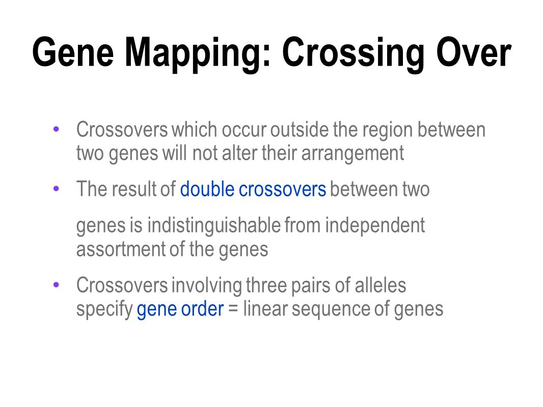 Gene Mapping: Crossing Over Crossovers which occur outside the region between two genes will not alter their arrangement The result of double crossovers between two genes is indistinguishable from independent assortment of the genes Crossovers involving three pairs of alleles specify gene order = linear sequence of genes