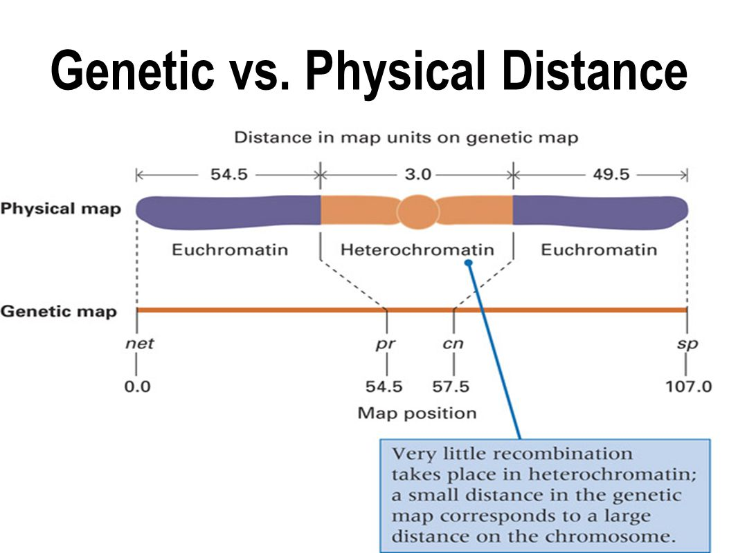 Genetic vs. Physical Distance