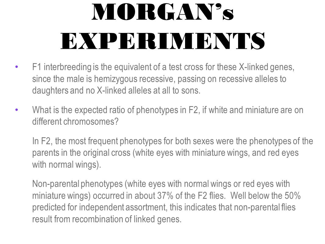 MORGAN's EXPERIMENTS F1 interbreeding is the equivalent of a test cross for these X-linked genes, since the male is hemizygous recessive, passing on recessive alleles to daughters and no X-linked alleles at all to sons.