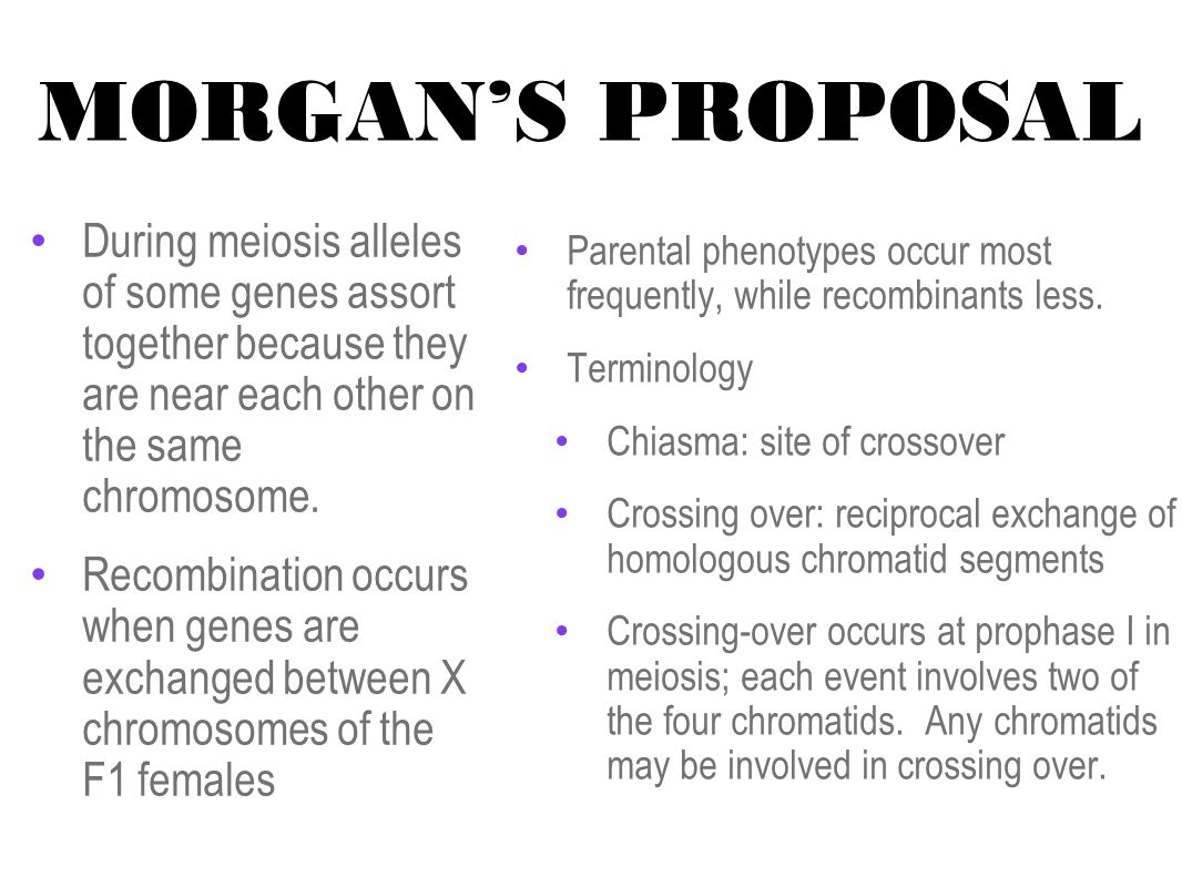 MORGAN'S PROPOSAL During meiosis alleles of some genes assort together because they are near each other on the same chromosome.