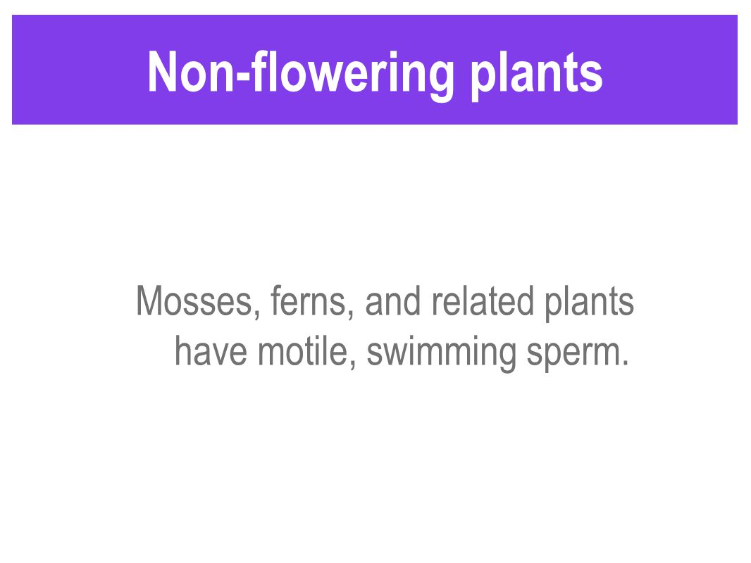 Non-flowering plants Mosses, ferns, and related plants have motile, swimming sperm.