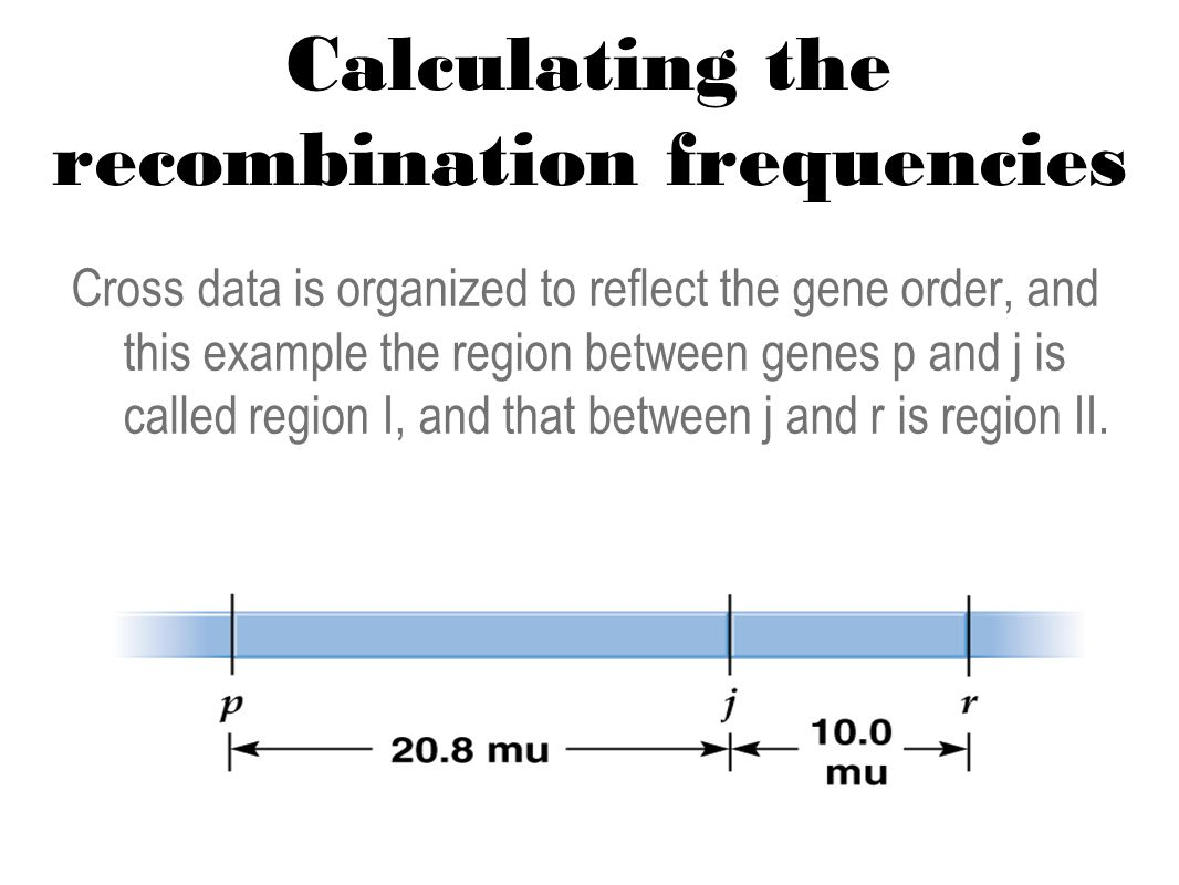Calculating the recombination frequencies Cross data is organized to reflect the gene order, and this example the region between genes p and j is called region I, and that between j and r is region II.