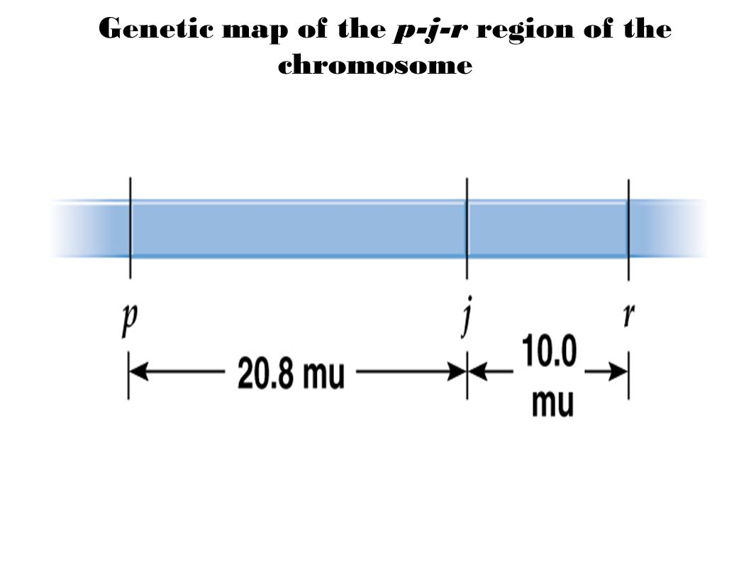 Genetic map of the p-j-r region of the chromosome